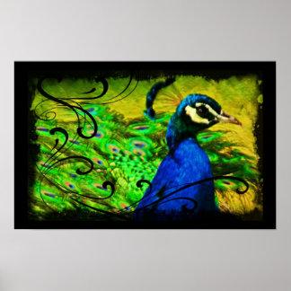 Elegant Peacock Swirl Artistic Fine Art Poster