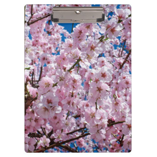 elegant pink cherry blossom tree photograph clipboard