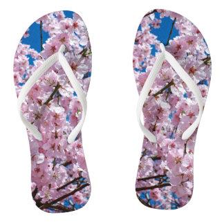 elegant pink cherry blossom tree photograph flip flops