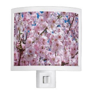 elegant pink cherry blossom tree photograph night lite