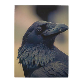 Elegant Raven portrait photo art