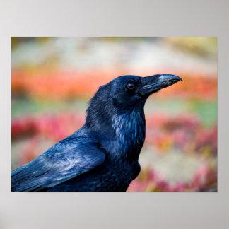 Elegant Raven Wildlife Poster