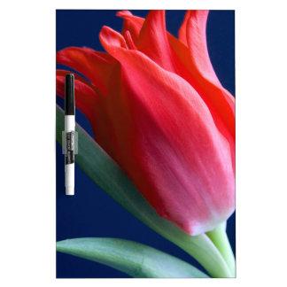 Elegant red tulip dry erase board