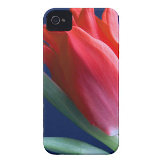Elegant red tulip iPhone 4 cases