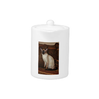 Elegant Siamese Cat