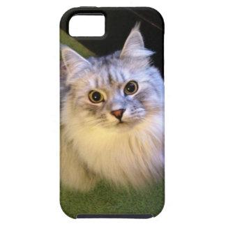 Elegant Siberian Cat iPhone 5 case