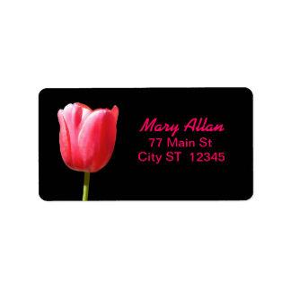 Elegant Single Tulip Bloom