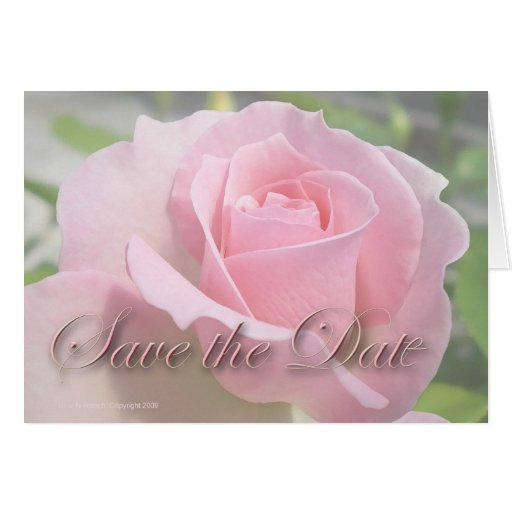 Elegant Soft Pink Rose Save The Date Greeting Cards