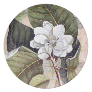 Elegant Southern White Magnolia Catesby Plate