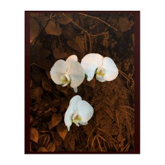 Elegant white orchids on deep sepia fern backgroun acrylic wall art