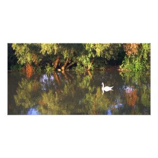 Elegant  White Swan on Lake - Nature Photography Photo Card