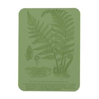 Elements of Botany: Fern Rectangular Photo Magnet