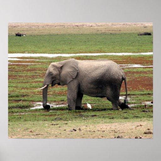 elephant amboseli print