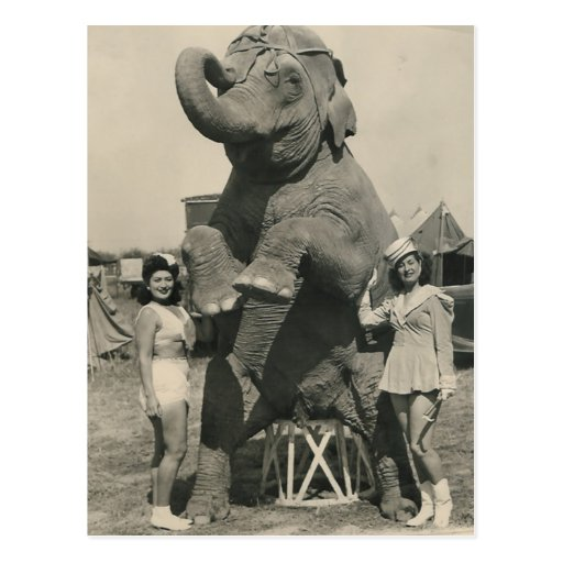 elephant and 2 girls circus post card