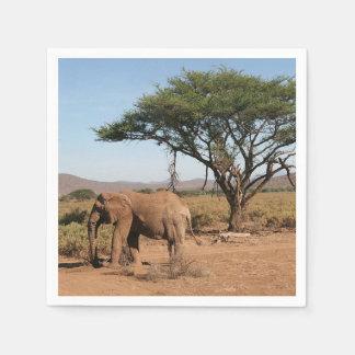 Elephant at Samburu National Reserve Paper Napkins