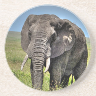 Elephant by Barb Craven_HDR Print.jpg Coaster