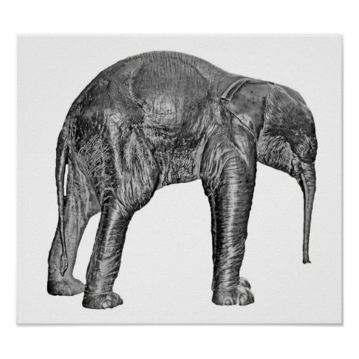 Elephant Calf in Black and White Posters