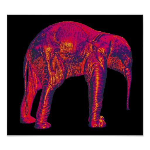 Elephant Calf, Red/Pink, Black Back Print