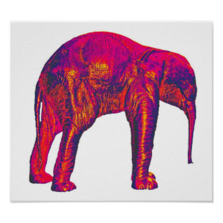 Elephant Calf, Red/Pink, White Back Posters