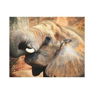 Elephant Canvas 50.80cm x 40.64cm, 3.81cm