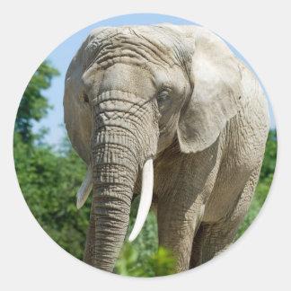 Elephant Classic Round Sticker