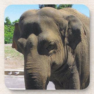 Elephant drink coaster set
