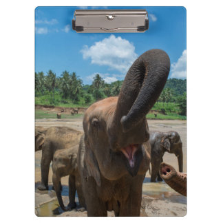 Elephant drinking water, Sri Lanka Clipboard