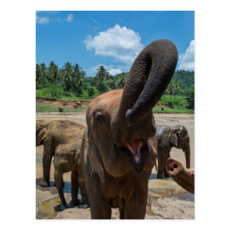 Elephant drinking water, Sri Lanka Postcard