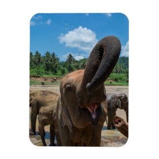 Elephant drinking water, Sri Lanka Rectangular Photo Magnet