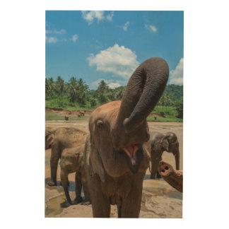Elephant drinking water, Sri Lanka Wood Wall Art