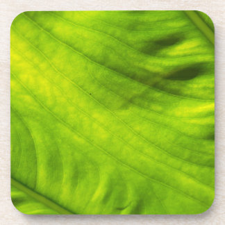 Elephant Ear Taro Hard Plastic Coasters