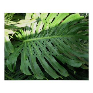 Elephant Ear Tropical Plant Poster