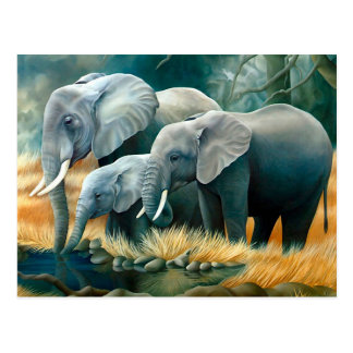 Elephant Family Safari Postcard