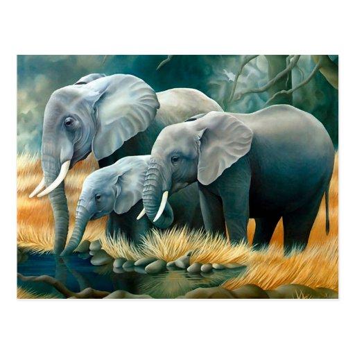 Elephant Family Safari Postcard