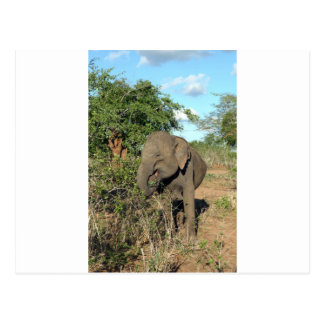 Elephant feeding Uda Walawe National park Postcard