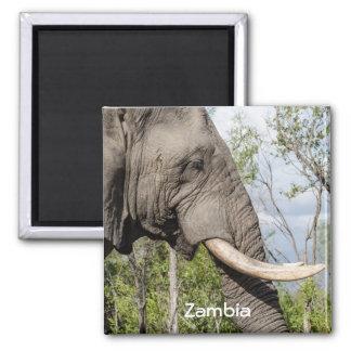 Elephant Fridge Magnet - Zambia