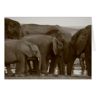 Elephant Greeting Cards for a Cause