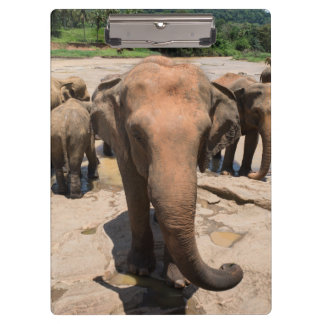 Elephant group portrait, Sri lanka Clipboard
