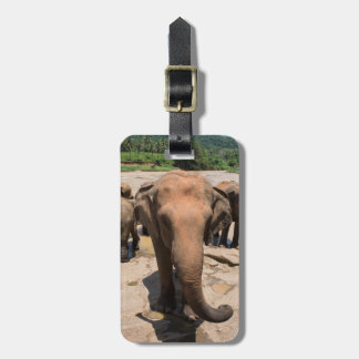 Elephant group portrait, Sri lanka Luggage Tag