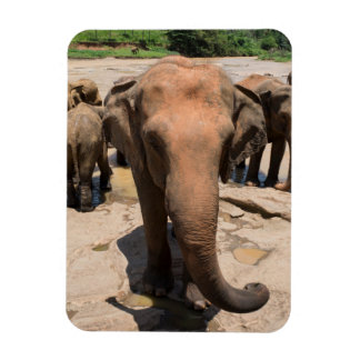 Elephant group portrait, Sri lanka Rectangular Photo Magnet