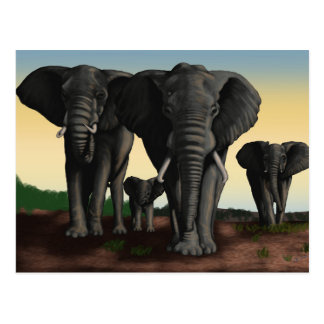 Elephant Herd Walking Postcard