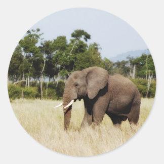 Elephant in Masai Mara, Kenya sticker