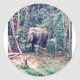 Elephant in Thailand Classic Round Sticker