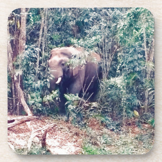 Elephant in Thailand Coaster