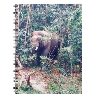 Elephant in Thailand Notebooks