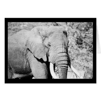 Elephant in the Serengeti Card
