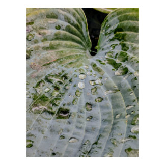 Elephant Leaf with Rain Drops Poster