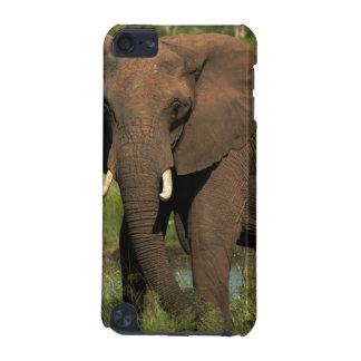 Elephant (Loxodonta Africana), Hwange National iPod Touch 5G Cases