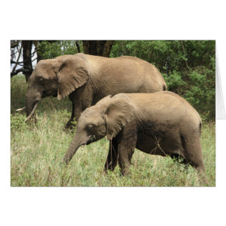 Elephant mother & calf card