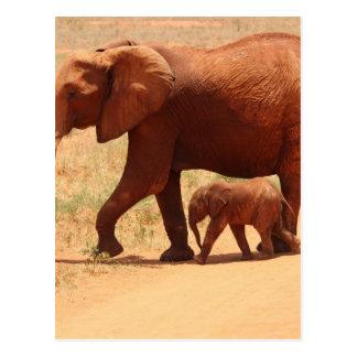 Elephant Mummy and Cub Postcard